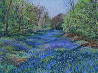 Bluebell-Wood,-soft-pastels